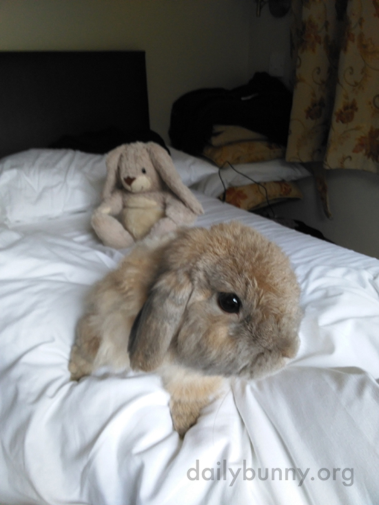 Bunny Spends a Lazy Sunday Morning in Bed with His Human and Stuffed Friend 1