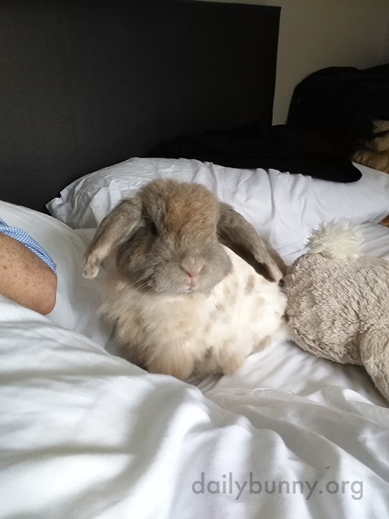Bunny Spends a Lazy Sunday Morning in Bed with His Human and Stuffed Friend 2