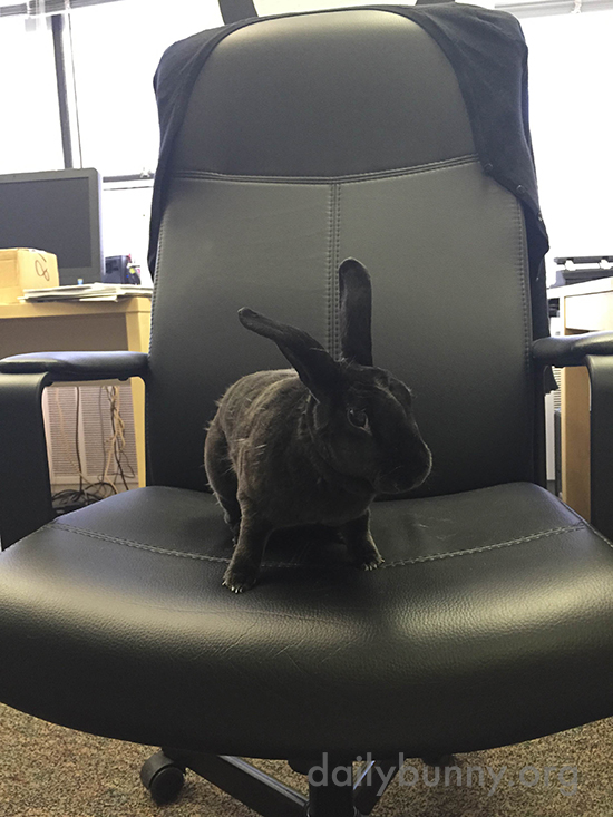 Have a Seat. Now, Why Should I Hire You as My Human?
