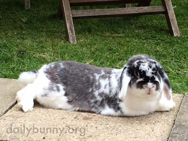 Independent Bunny Can Now Visit the Garden Whenever She Feels Like It