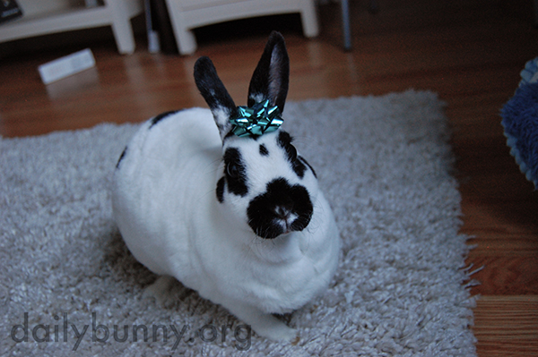 Queen Bunny Has a Crown for Any Occasion 2