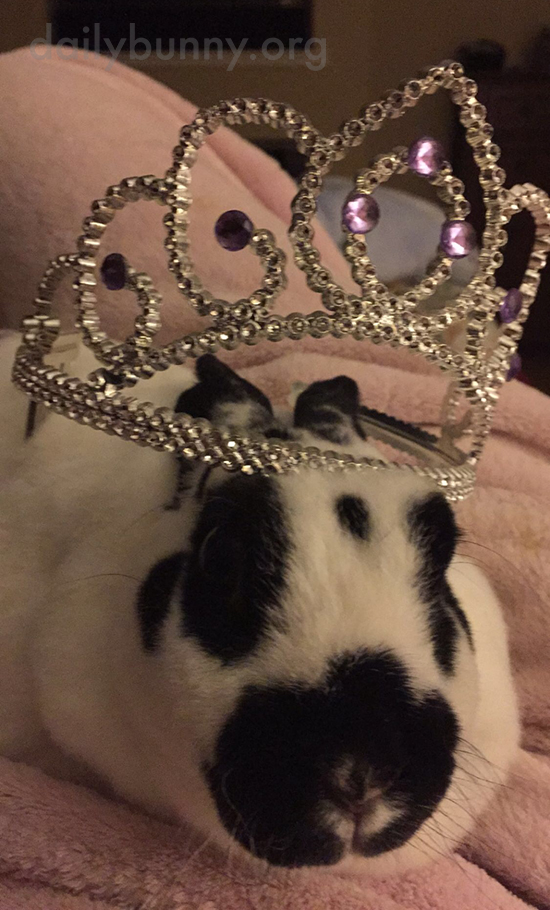 Queen Bunny Has a Crown for Any Occasion 3