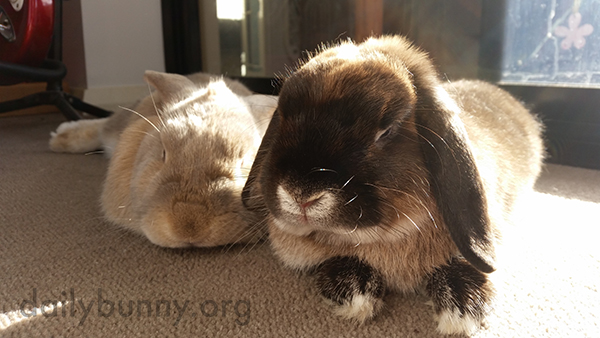 Bunnies Lounge in a Sunbeam