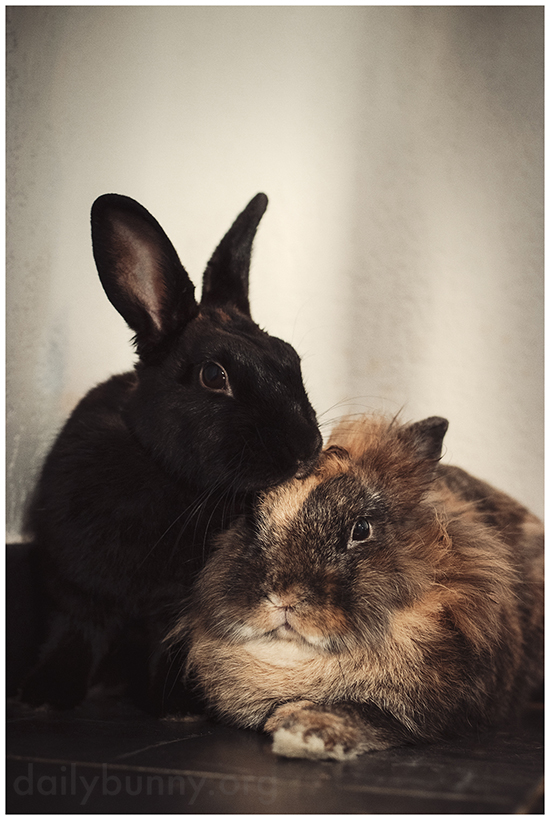 Bunnies Pose for a Seriously Formal Portrait