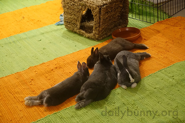 Bunnies Stretch Out and Relax Together