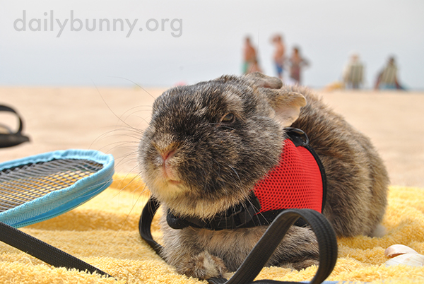 Bunny Does Not Enjoy the Beach 1