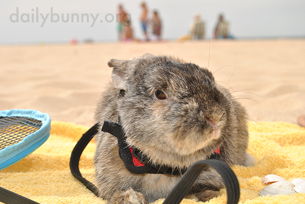 Bunny Does Not Enjoy the Beach 2