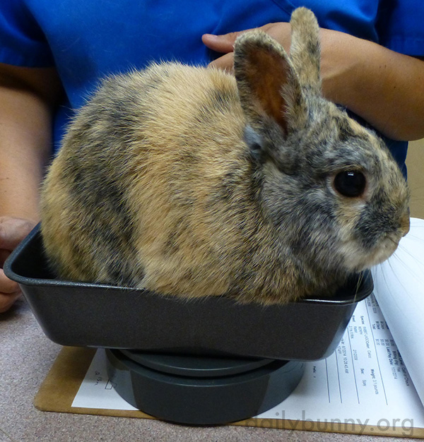 Bunny Gets Weighed at the Vet