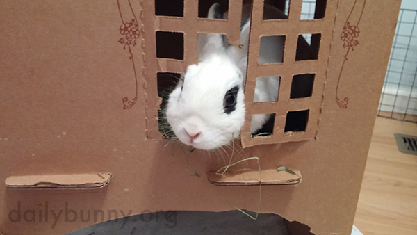 Bunny Has Made Her Cardboard Castle Her Own 1