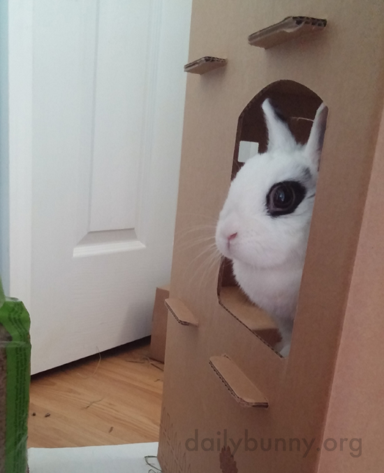 Bunny Has Made Her Cardboard Castle Her Own 3