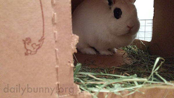 Bunny Has Made Her Cardboard Castle Her Own 4