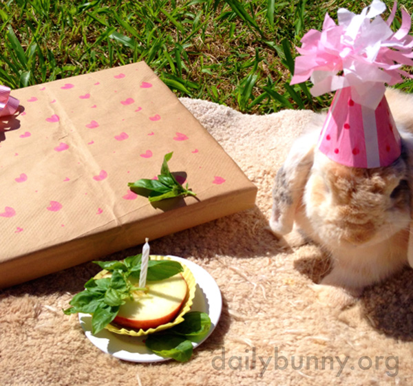 Bunny Is the Guest of Honor at Her Party 1