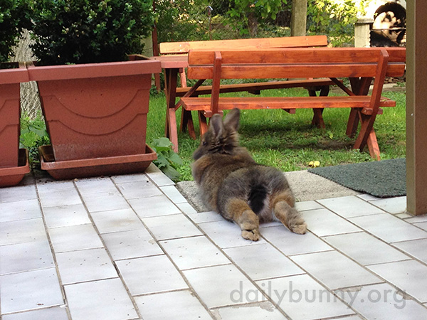 Bunny Stretches Her Hind Legs Straight Out Behind Her