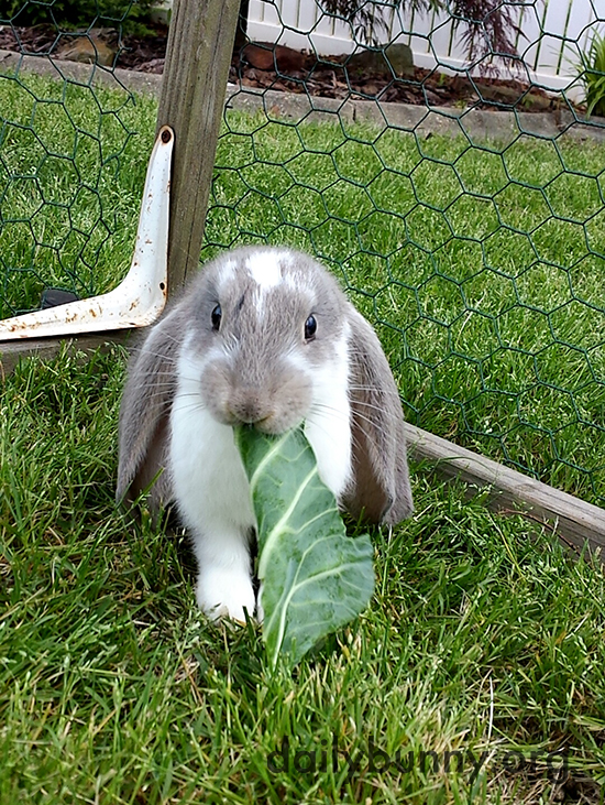 Bunny, That Leaf Is Even Bigger Than Those Big Ears of Yours!