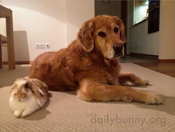 Bunny and the Dog Relax Together on the Floor