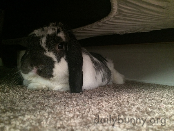 Bunny's Found a Nice Dark, Cool Hiding Spot Under the Bed