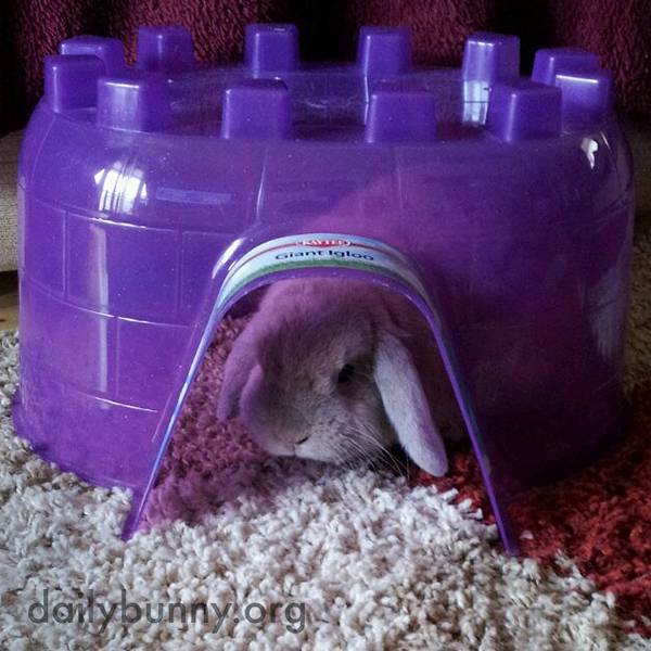 Bunny's Igloo Is a Good Hiding Place