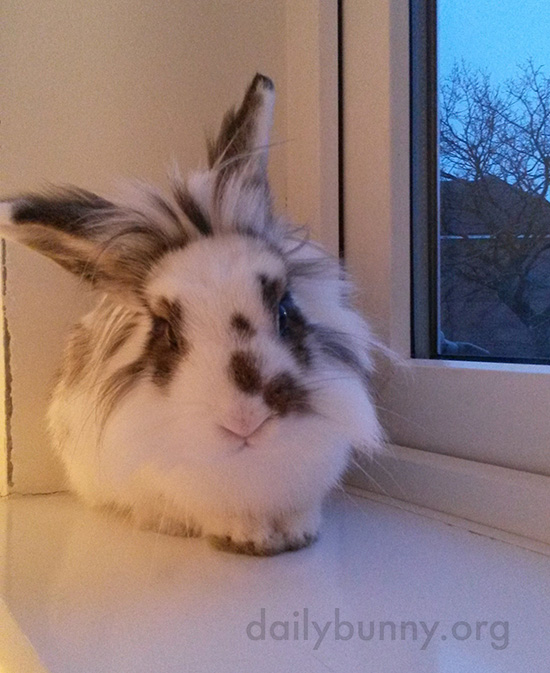 From the Windowsill, Bunny Can Supervise Goings-On Both Inside and Outside 1