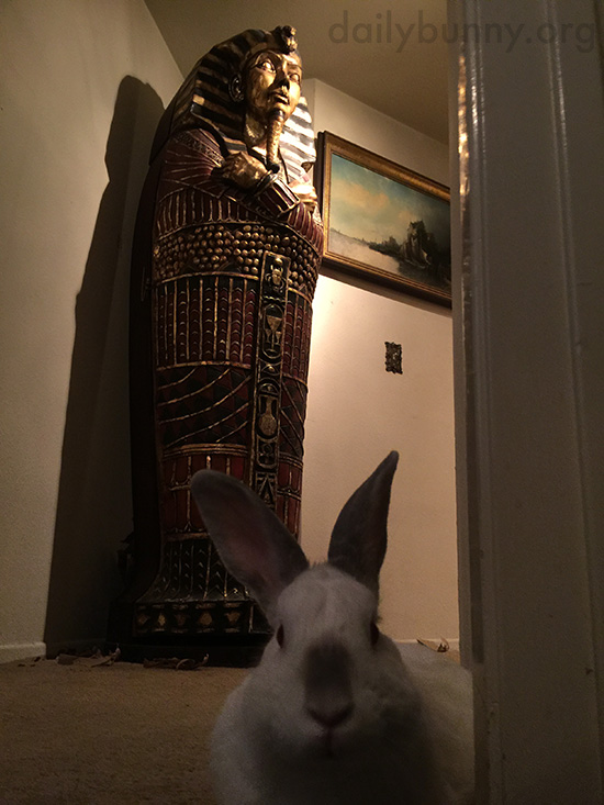 Step Aside, Howard Carter - Archaeologist Bunny Has Made an Important Discovery!