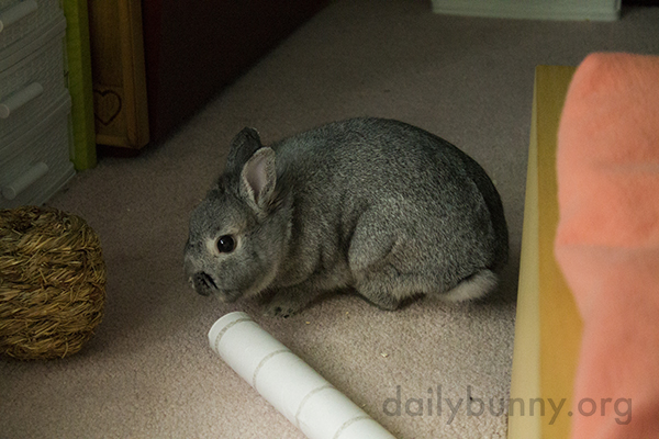 What Do You Think, Bunny - Tube or Ball?