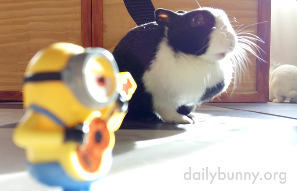 Bunnies Show Varying Degrees of Interest in Their Minion Toy 2