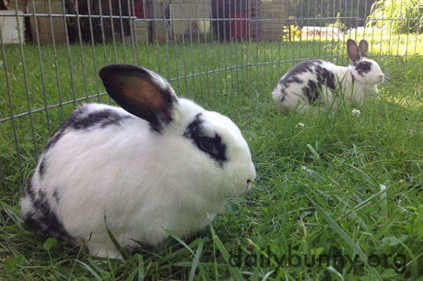 Bunnies Sit in Long Grass