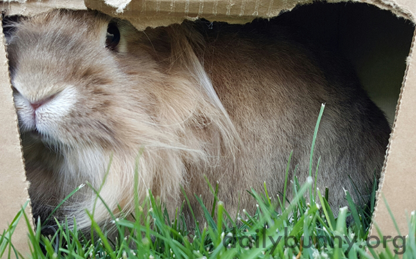 Bunnies Sit in a Cardboard Box When They Tire of the Grass 1