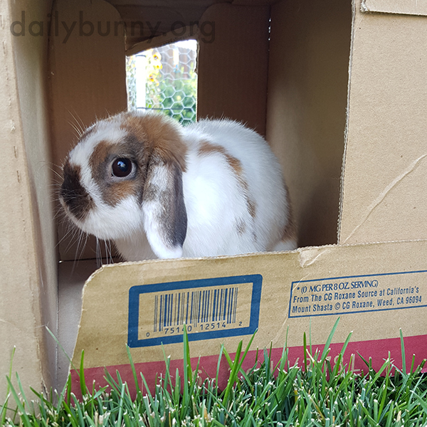 Bunnies Sit in a Cardboard Box When They Tire of the Grass 2