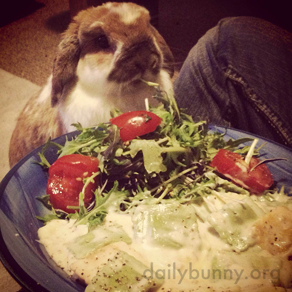 Bunny Is Happy to Share Her Human's Salad 1