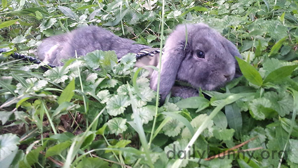 Bunny Is a Little Furry Island in a Sea of Clover 2