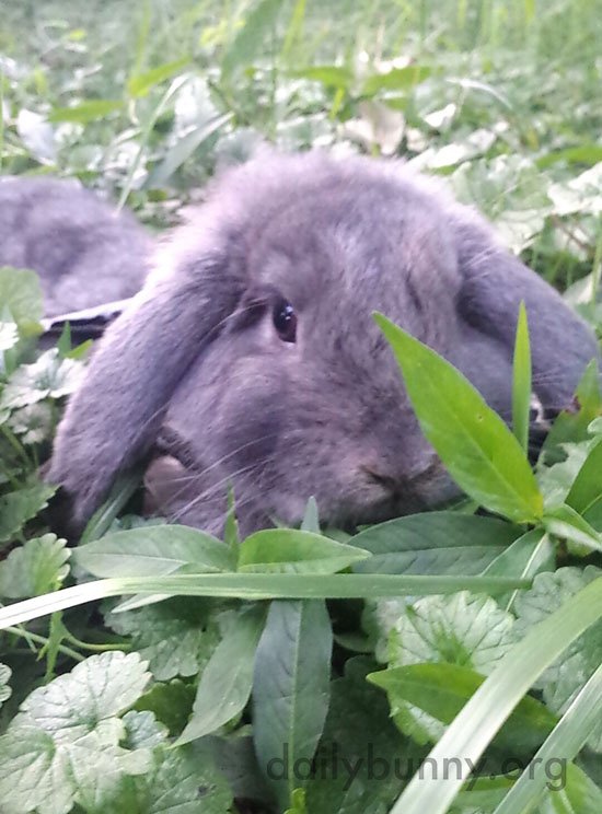 Bunny Is a Little Furry Island in a Sea of Clover 3