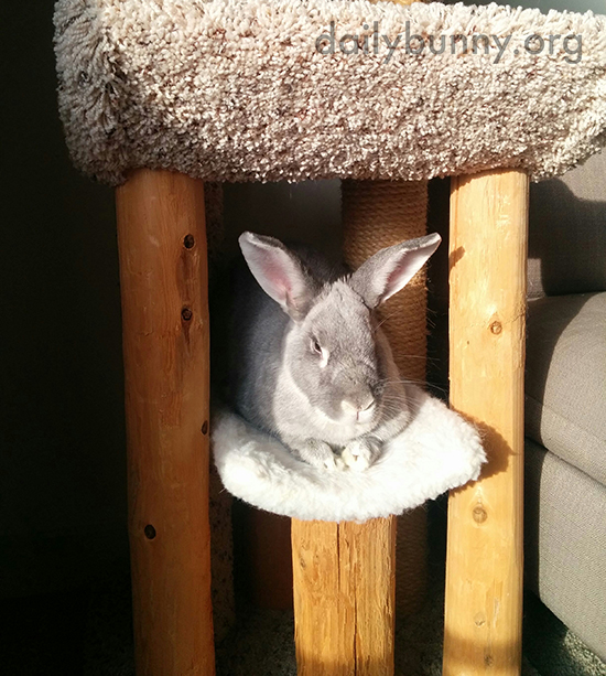 Bunny Knows How to Maximize Her Time in the Sun