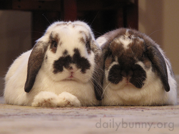 Bunny Pair Looks Half Inquisitive, Half Cranky