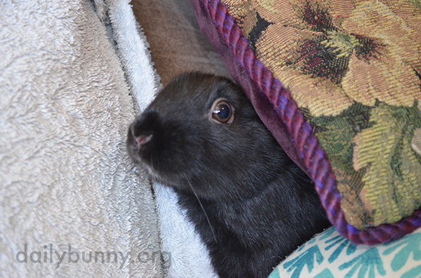 Bunny Peeks Out from Behind the Cushions