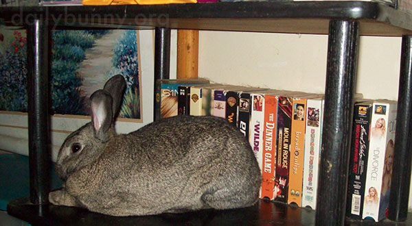 Bunny's Found a Nice, Smooth, Cool Surface to Rest On