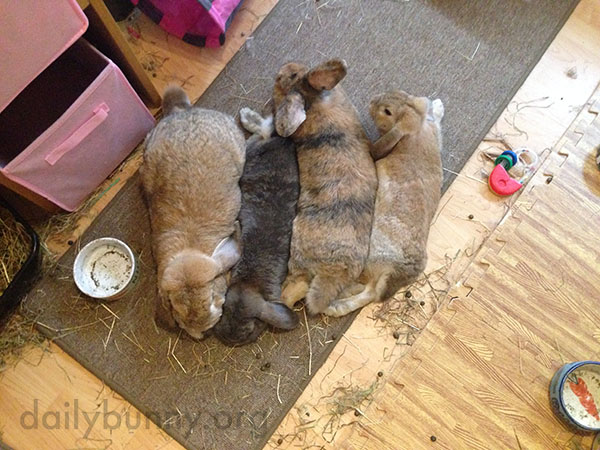 Four Bunnies Relax Side-by-Side