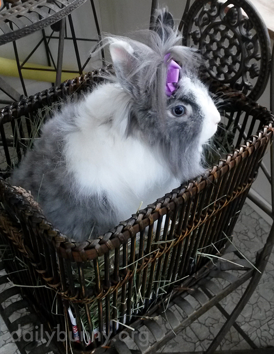 Pretty Bunny Wears a Bow in Her Long Fur 2
