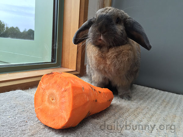 You Know I Love Carrots, Human, But I Don't Think I Can Eat All This 1
