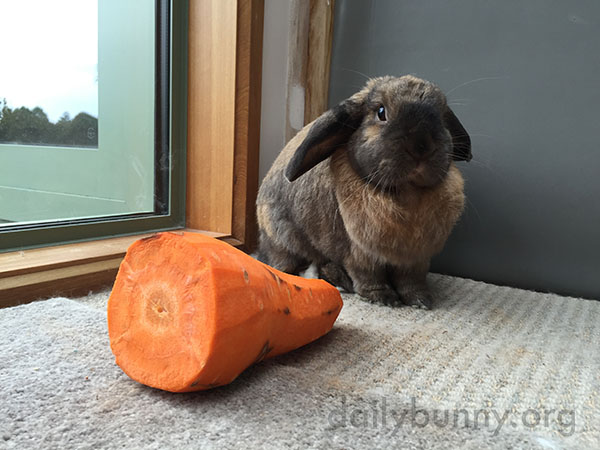 You Know I Love Carrots, Human, But I Don't Think I Can Eat All This 4