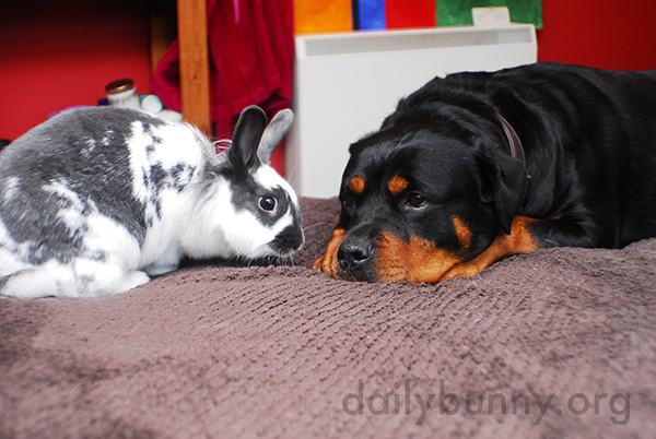 Bunnies Enjoy a Lazy Day with Their Dog Friend 2
