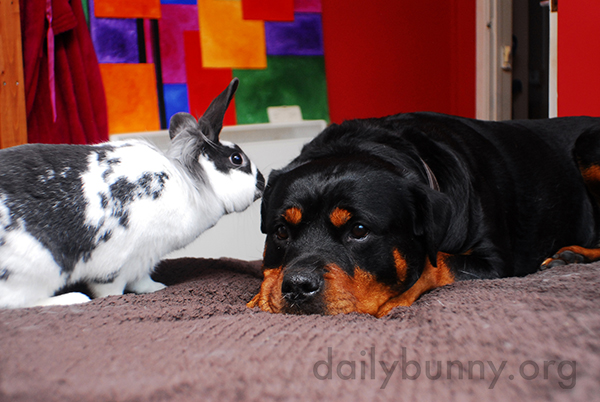 Bunnies Enjoy a Lazy Day with Their Dog Friend 3