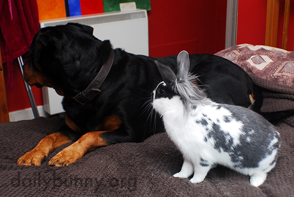 Bunnies Enjoy a Lazy Day with Their Dog Friend 4