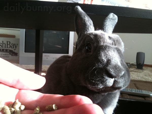 Bunny Enjoys a Snack and a Sunbeam