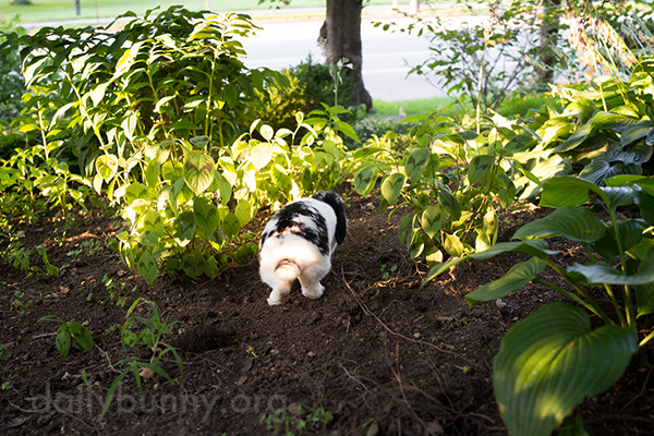 Bunny Explores the Garden Before Heading Back Inside with His Loot 1