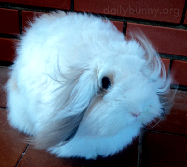 Bunny Lets the Breeze Float Through His Fur