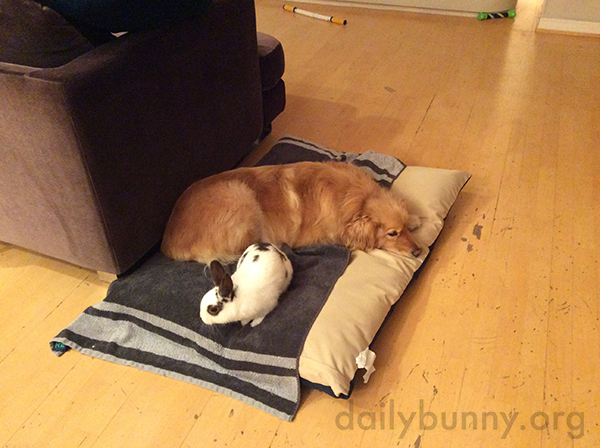 Bunny Shares a Cushion with His Pup Friend