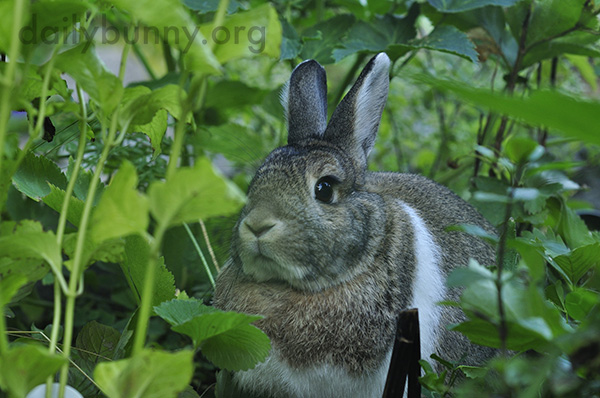 Bunny Sits in the Garden, Surrounded by Greenery