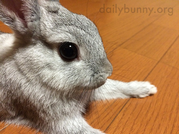 Bunny Stretches Out Those Front Legs 2