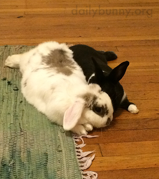 Bunny Tells His Friend a Secret