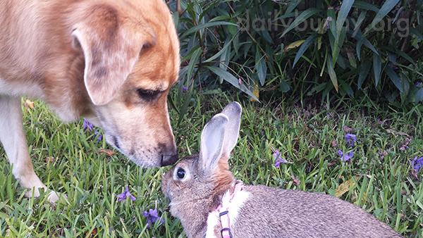 Bunny and Her Dog Friend Sniff Each Other